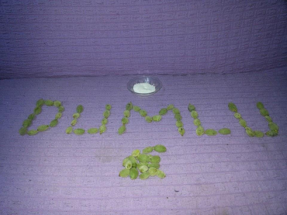 dumlu7